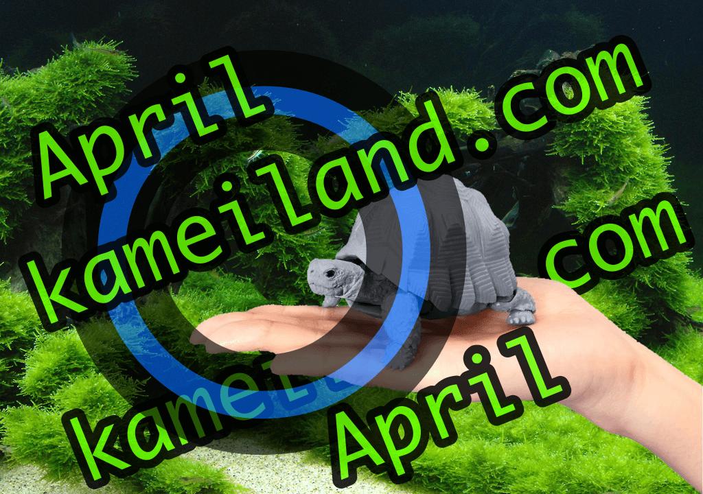 4月最北投資ポイ活